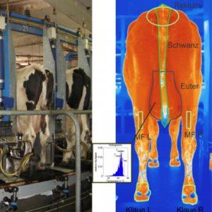 thermography_veterinary_medicine_infraredcamera-480x480